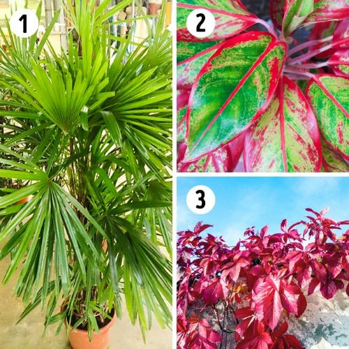 Những loại cây cảnh giúp lọc không khí tốt nhất cho nhà bạn